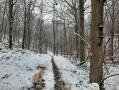 Dans le Bois du Grand Fréchy à Biesme