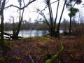 Forêt alluviale de Freistett