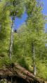Boucle forestière au-dessus d'Auxelles Haut