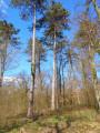 Boucle en forêt de la Hardt du Sud