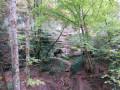 Dardagny par la forêt et les vignes