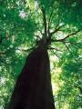 Sentier de découverte de la Forêt de Haguenau