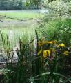Au centre des mille étangs