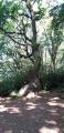 Le Bois de Breuil