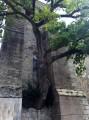 Circuit du vieux chêne