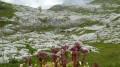 Plateau d'Assy - Refuge de Platé