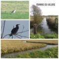 Marais de Villers