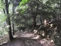 Une descente dans la forêt empreinte de mystère