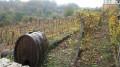 Vigne de Saint-Dizier-l-Eveque